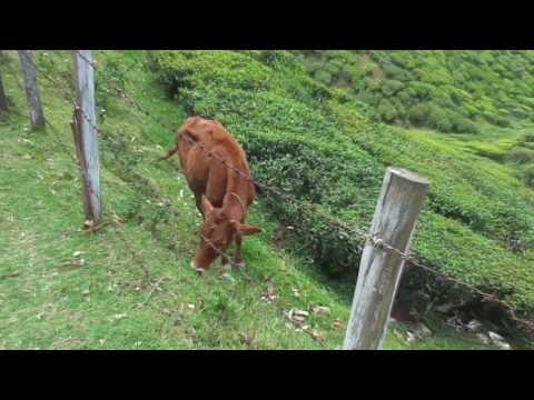 My trip to Munnar kerala