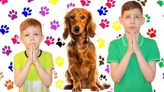 Вайн дети просят собаку от канала сосиски шоу