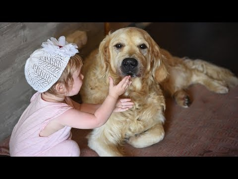 Adorable Babies Feeding Dog Compilation