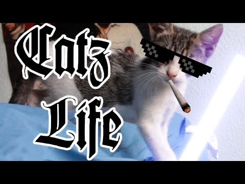 Cat Fail With Lightsaber. Catz Life (Animal Thug Life)