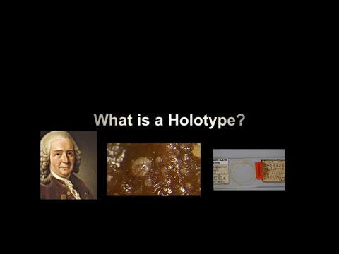 What is a Holotype?