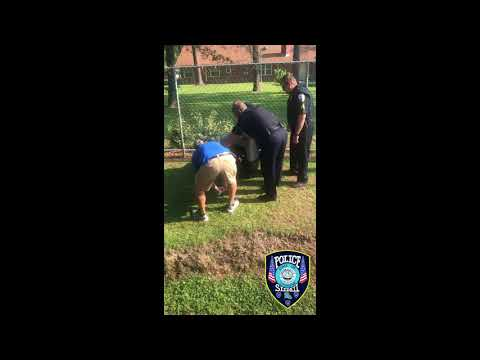 Watch: Loitering alligator captured by Slidell PD, animal control