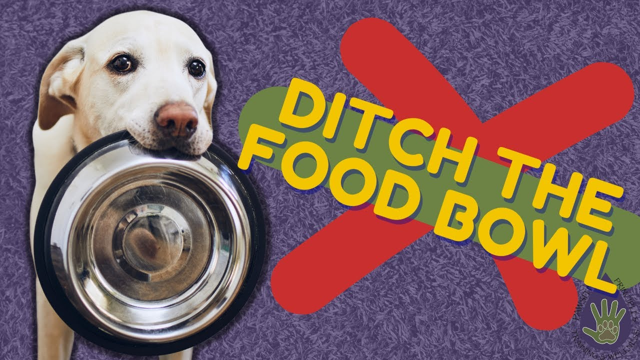 How to Ditch The Dog Food Bowl for Better Behavior