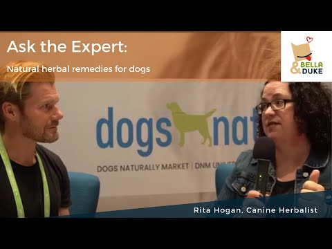 Herbal remedies for dogs with Rita Hogan – Podcast 64
