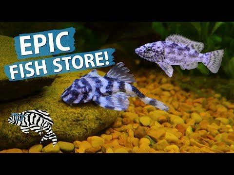 FISH STORE TOUR! Top Shelf Aquatics 2018