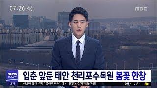 [대전MBC뉴스]입춘 앞둔 태안 천리포수목원 봄꽃 한창