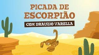 PICADA DE ESCORPIÃO (com Drauzio Varella)