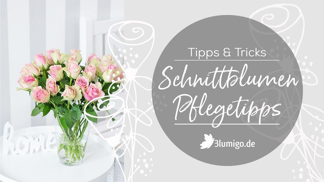 5 Tipps Um Schnittblumen Länger Frisch Zu Halten Blumigo