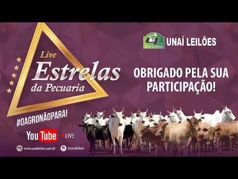 Unaí Leilões realiza live: ESTRELAS DA PECUÁRIA!