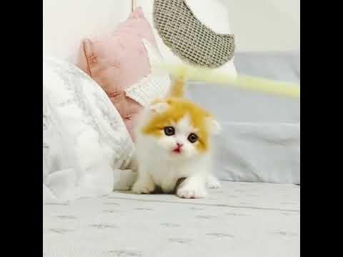 Cute Cat and Cute Kitten (Part 27) | Whatsapp Status Video