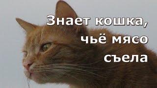 Знает кошка, чьё мясо съела