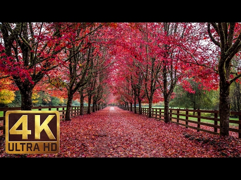 3.5 HRS - Soothing/Romantic/Ambient Piano Music with Fall Foliage Scenery - Part 9