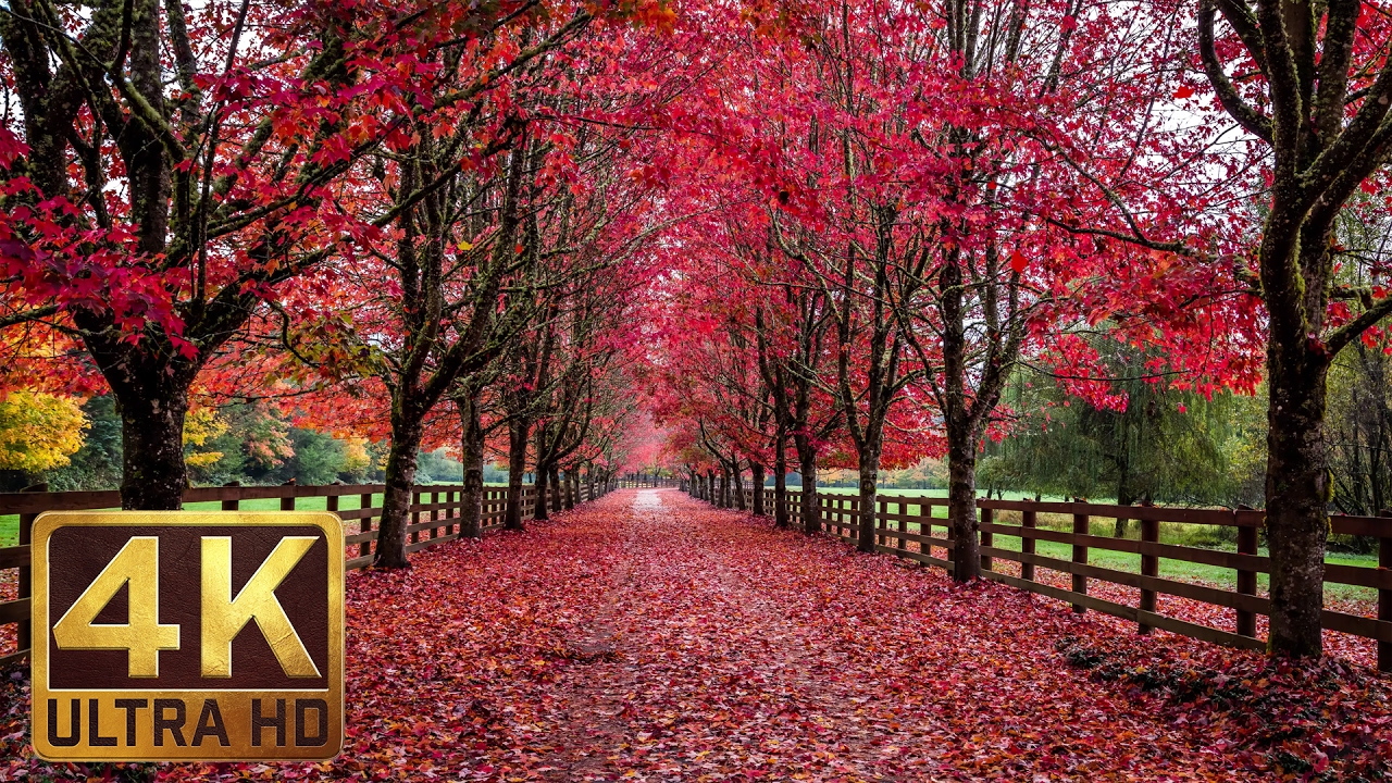 3 5 hrs soothing romantic ambient piano music with fall foliage