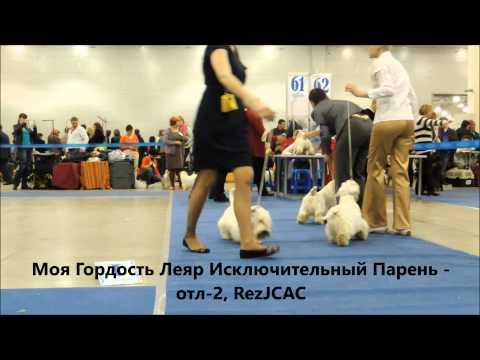 Евразия 2 Силихем Терьер ЩенкиЮниоры