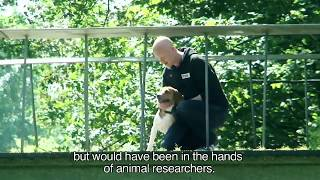 Animal Rights redt 6 beagles uit een proefdierfaciliteit.