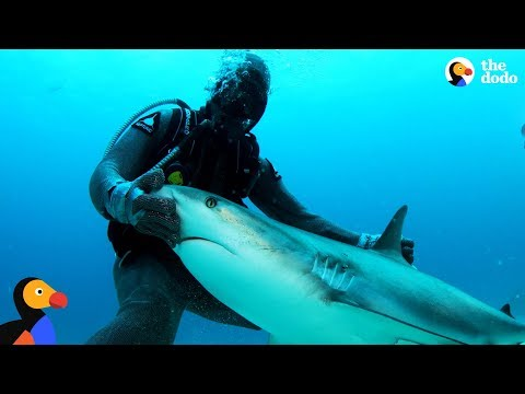 Lisa St. Regis - Shark Whisperer Helps Hurt Sharks and They Love Her!