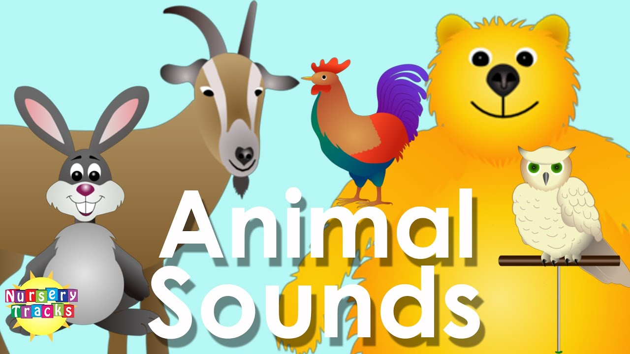 sounds animal song