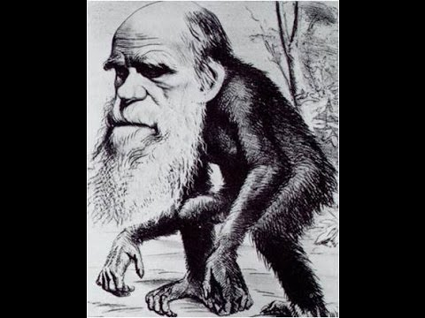 An excellent Evolutionary argument against Biblical Creationism