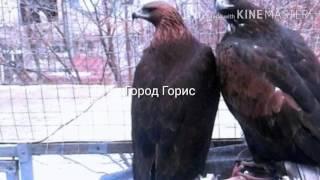 Хишние птицы.Армения городе Горис.(, 2017-01-20T11:52:14.000Z)
