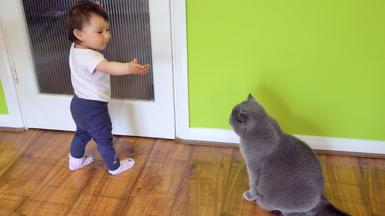 Baby annoying Cats