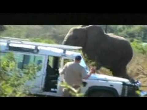 Lawrence Anthony's Rehabilitation of Elephants
