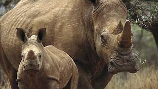 топ 10 самых опасных животных