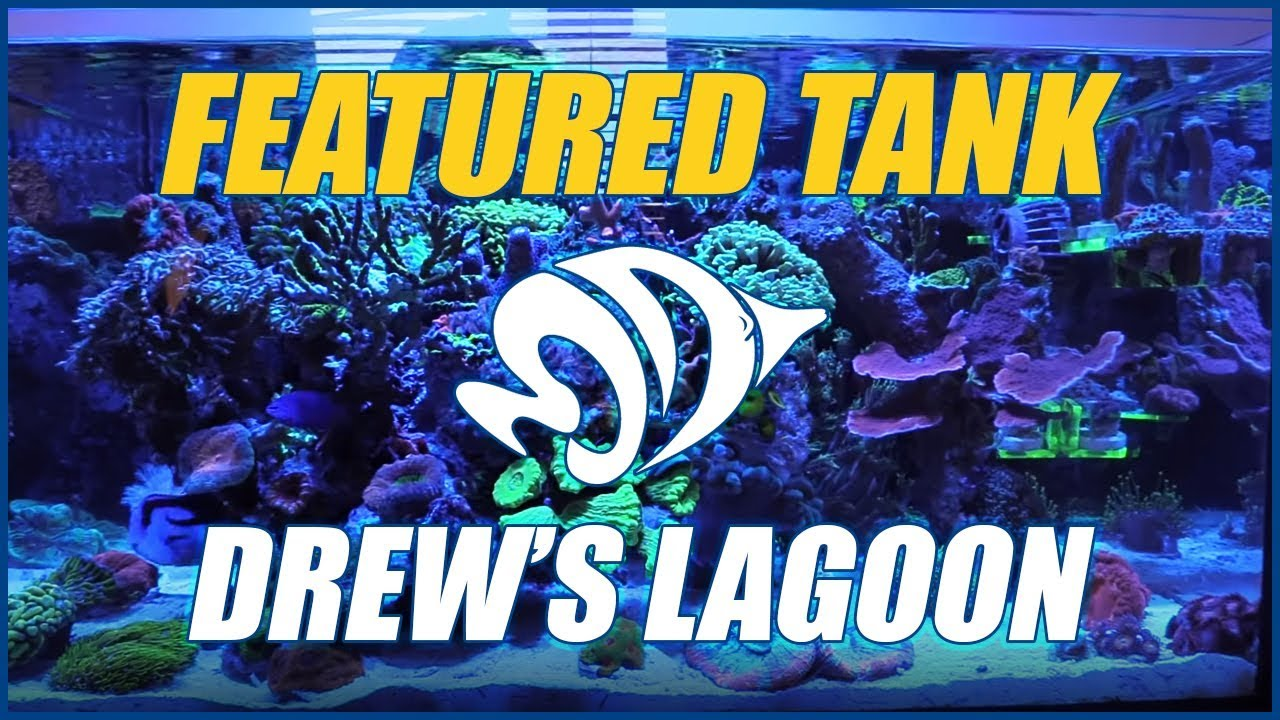 Drew's Lagoon is an AMAZING AIO Nano Reef Aquarium - NEW FEATURED TANK! Thumbnail