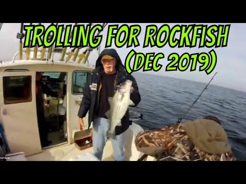 Trolling For Stripers (aka: Rockfish) In The Chesapeake Bay
