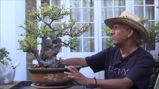 Video Bonsai Wild Old Chinese Elm Bonsai Tree Part 2 download MP3, 3GP, MP4, WEBM, AVI, FLV Desember 2017