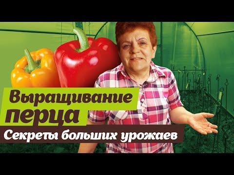 Как выращивать перец | выращивать | болгарский | секретов | светлана | налетова | теплице | сладкий | огород | перец | дача