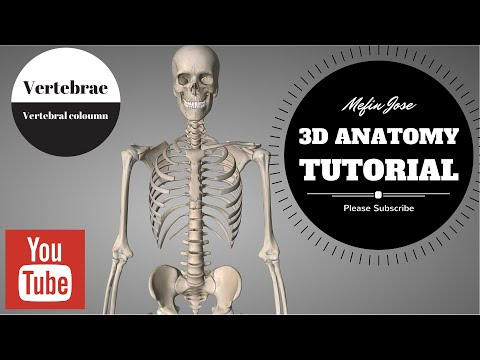 Anatomy of Vertebral column  3D Tutorial : Cervical, Thoracic, Lumbar and Sacral Regions