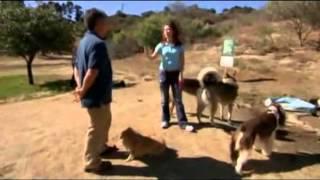 El encantador de perros segunda temporada capitulo 7