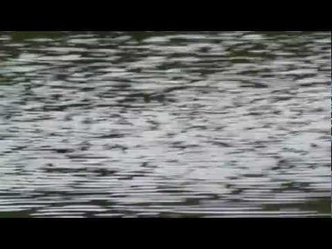 Jims Caviar lake wolf crossing