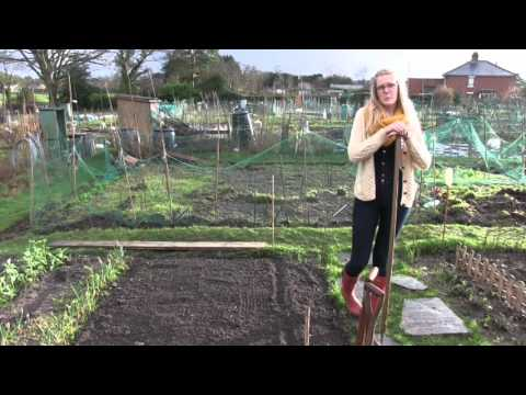 Katie's Allotment - February 2014 - Tour, Peas and Cosmos