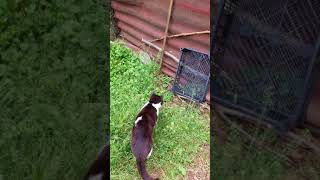 kirpi ve meraklı kedi