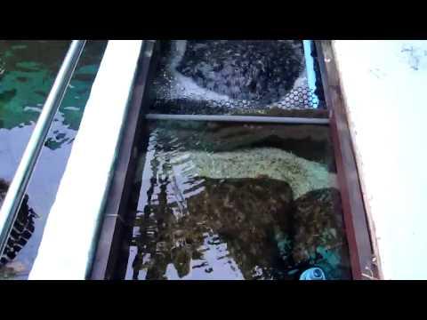 Yourkoishouse #8 ปลาคาร์ฟ, ระบบกรองบ่อปลาคาร์ฟ, มูฟวิ่งเบด