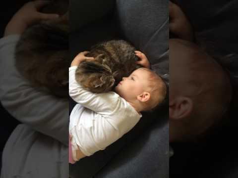 Baby Assures Kitten