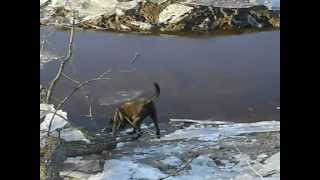 Too cold to fetch a stick from the creek