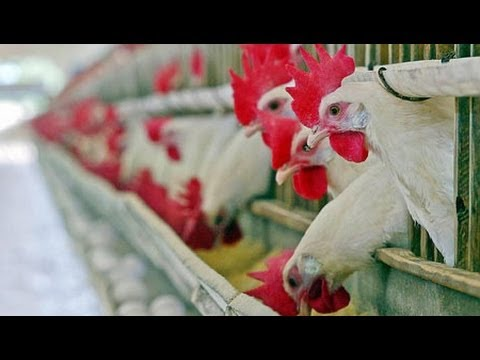 Obama Budget Plans on Replacing USDA Poultry Inspectors with Industry Self Regulation
