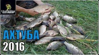 Рыбалка на реке Ахтуба.  2016 .(LiveFishing)