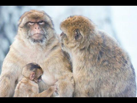 Gibraltar – wildlife and heritage