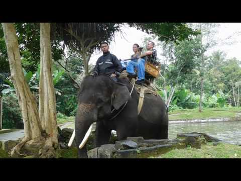 If you visit Indonesia please do not pay to ride elephants
