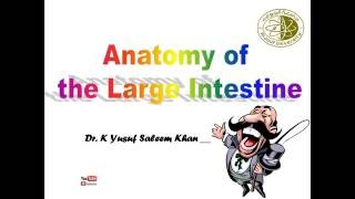 Anatomy Lecture on Large  Intestine ....... by Dr. Yusuf