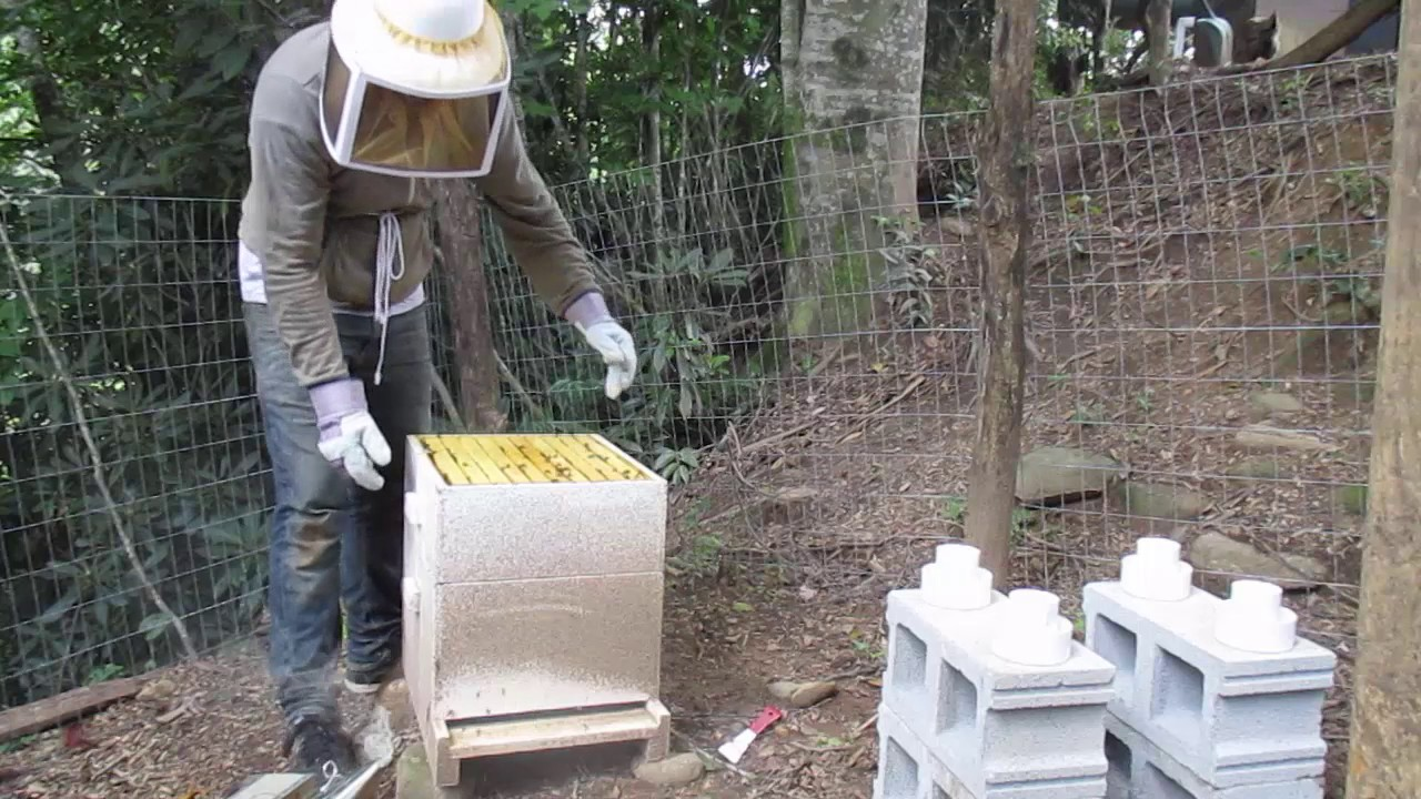 honey bees attack youtube