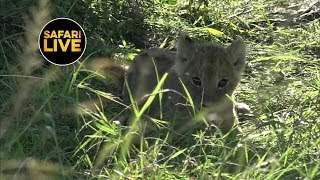 safariLIVE - Sunset Safari - January 31, 2019