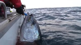 Repeat youtube video GIANT SOUTHERN BLUEFIN TUNA on Stella - YouFishTV Part 2