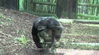 Chimpanzee Forest - Maryland Zoo In Baltimore