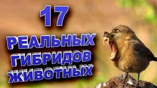 17 реально существующих гибридов животных