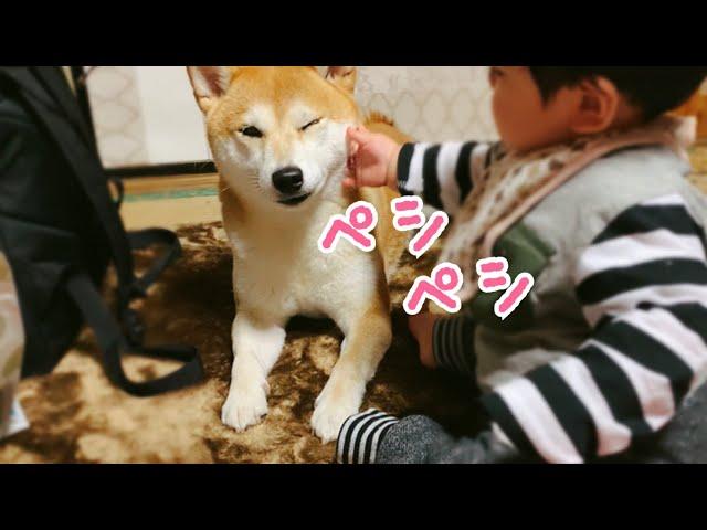 赤ちゃんから目が離せない柴犬 Dog Babysitting