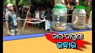 Snake rescue in bhadrak
